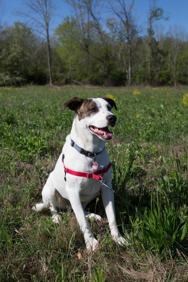 Adopt A Senior Dog Ct