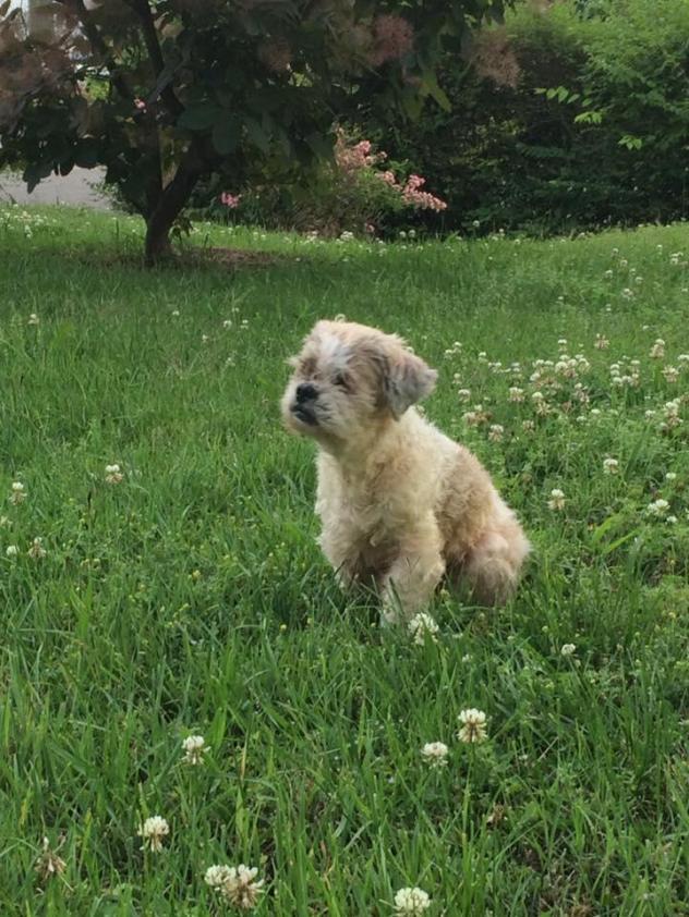 Fluffy Dog Rescue Application