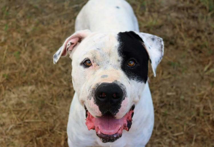 Vinny - Big Fluffy Dog Rescue