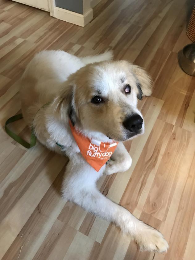 Big Fluffy Dog Rescue Blog