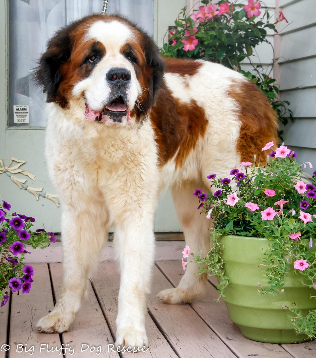 Senior Dog Rescue Pa