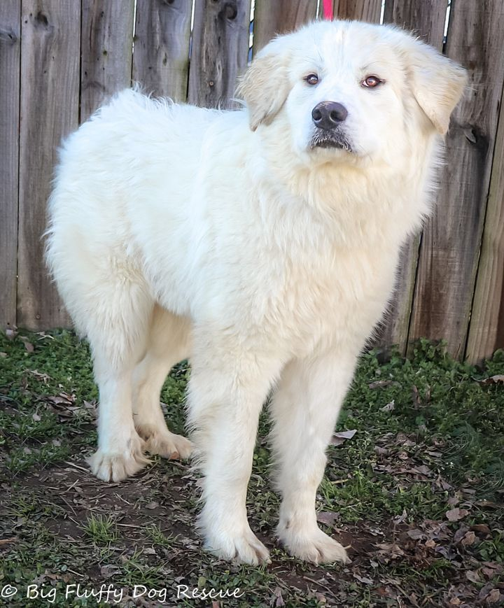Home Big Fluffy Dog Rescue