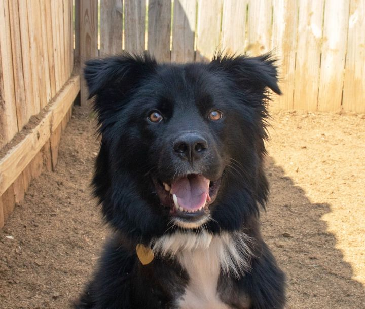 Adopted Big Fluffy Dog Rescue