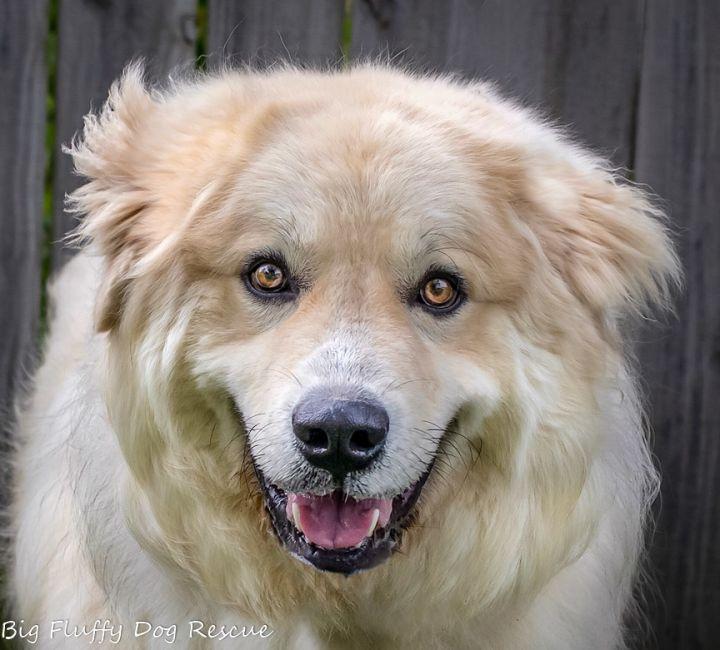 Home - Big Fluffy Dog Rescue